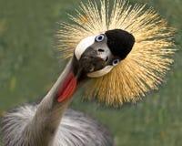 ¡Pájaro tonto! fotografía de archivo