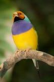 Pájaro tropical Foto de archivo