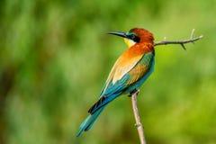 Pájaro tropical colorido exótico Imágenes de archivo libres de regalías