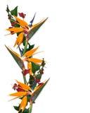 Pájaro tropical de la frontera de las flores del paraíso Fotos de archivo