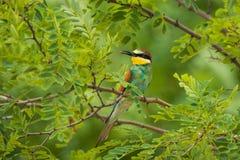 Pájaro tropical exótico Imagenes de archivo