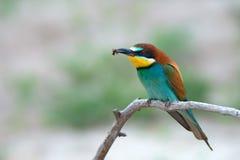 Pájaro tropical exótico Imágenes de archivo libres de regalías