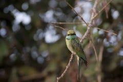 Pájaro tropical lindo Foto de archivo libre de regalías