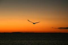 Pájaro un dSunset - isla de Fraser, la UNESCO, Australia Fotos de archivo