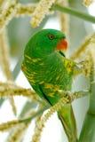 Pájaro verde Imagen de archivo