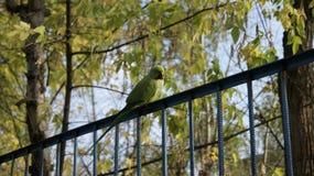 Pájaro verde Fotos de archivo