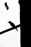 Pájaro vertical de la silueta en una rama del árbol Imagenes de archivo