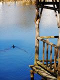 pájaro viejo del gloriette y de agua Imagen de archivo libre de regalías