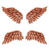 Pájaro Wing Set Foto de archivo