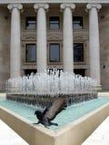 Pájaro y agua Imagen de archivo libre de regalías