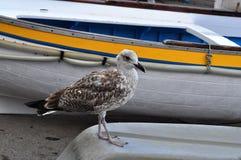 Pájaro y barco en Capri Imágenes de archivo libres de regalías
