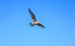 Pájaro y cielo azul Foto de archivo libre de regalías