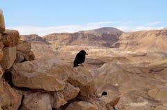 Pájaro y desierto Imágenes de archivo libres de regalías