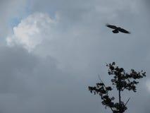 Pájaro y el árbol Fotografía de archivo