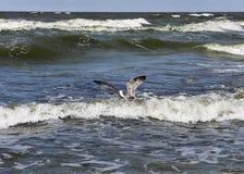 Pájaro y el mar Foto de archivo