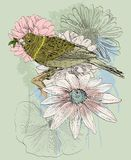 Pájaro y flor Imagen de archivo libre de regalías