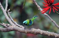 Pájaro y flor roja Foto de archivo libre de regalías