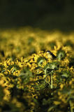 Pájaro y flores amarillas imagen de archivo