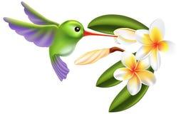 Pájaro y flores del tarareo Fotografía de archivo libre de regalías