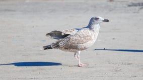 Pájaro y fondo blanco Imágenes de archivo libres de regalías