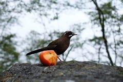 Pájaro y fruta imagen de archivo