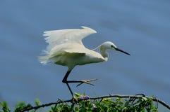 Pájaro y hoja Imagen de archivo libre de regalías