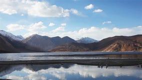 Pájaro y montaña en el lago Pangong almacen de video