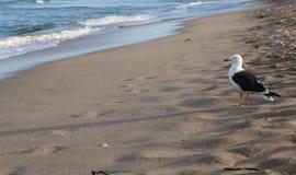 Pájaro y océano Fotos de archivo