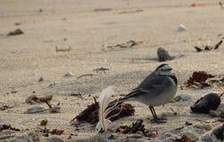 Pájaro y pluma en la playa fotografía de archivo libre de regalías