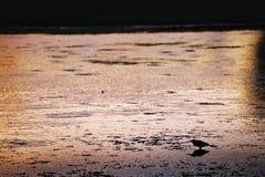 Pájaro y puesta del sol Fotografía de archivo libre de regalías
