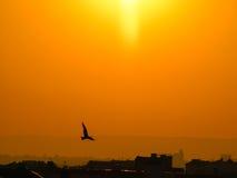 Pájaro y puesta del sol Imagenes de archivo