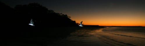 Pájaro y puesta del sol - isla de Fraser, la UNESCO, Australia Foto de archivo