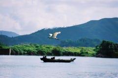 pájaro y ser humano del ardeidae del vuelo Foto de archivo libre de regalías
