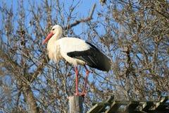Pájaros 9 foto de archivo libre de regalías