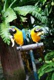 Pájaros. Foto de archivo