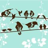 Pájaros Imágenes de archivo libres de regalías