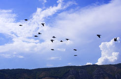 Pájaros Fotografía de archivo libre de regalías
