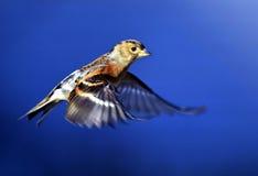 Pájaros Foto de archivo libre de regalías