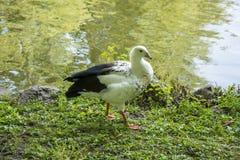 Pájaros 104 Imagen de archivo
