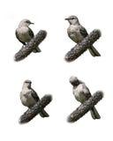 Pájaros aislados en blanco imagen de archivo libre de regalías