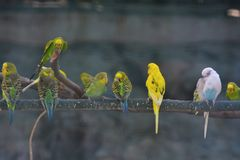 Pájaros alineados del amor Fotografía de archivo libre de regalías