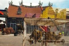 Pájaros amarillos delante de un templo Foto de archivo libre de regalías