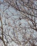 Pájaros amistosos Foto de archivo