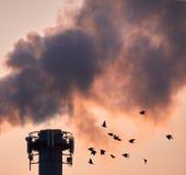 Pájaros antes de una central eléctrica Fotos de archivo libres de regalías