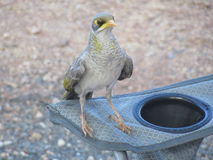 Pájaros australianos imagenes de archivo