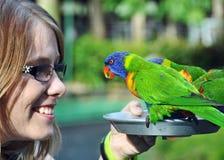 Pájaros australianos de alimentación sonrientes felices turísticos de Lorikeets del arco iris de la mujer joven fotografía de archivo