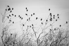 Pájaros blancos y negros en árbol Imagen de archivo libre de regalías