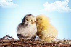 Pájaros cariñosos Fotos de archivo