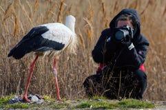 Pájaros - ciconia del Ciconia de la cigüeña blanca con el fotógrafo Fotografía de archivo libre de regalías