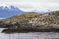 Pájaros - colonia del cormorán Foto de archivo
